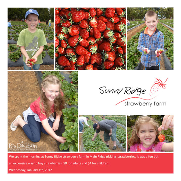 Jan-4---Strawberry-Farm
