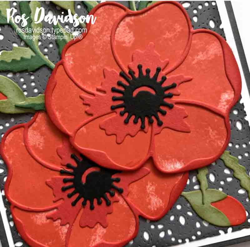 Stampin' Up, Colour Creations, Color Creations, Blog Hop, basic gray, painted poppies, stitched lace dies, poppy moments dies, no sentiment card, blank card,